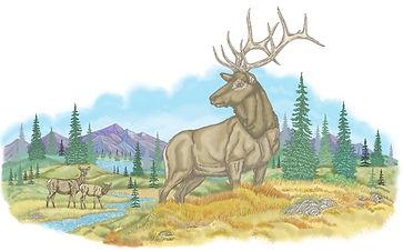big elk shirt.jpg