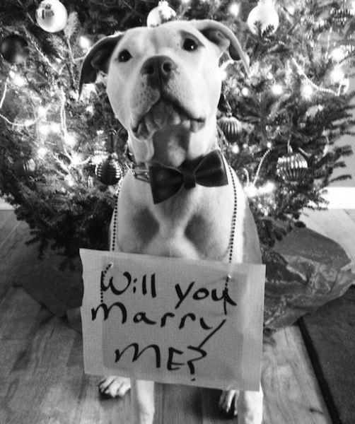 kutya a karácsonyfa előtt, dog under the christmas tree