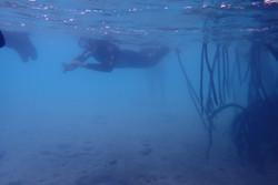 Mangrove_snorkeling
