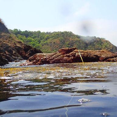 transect hrough sargassum.jpg