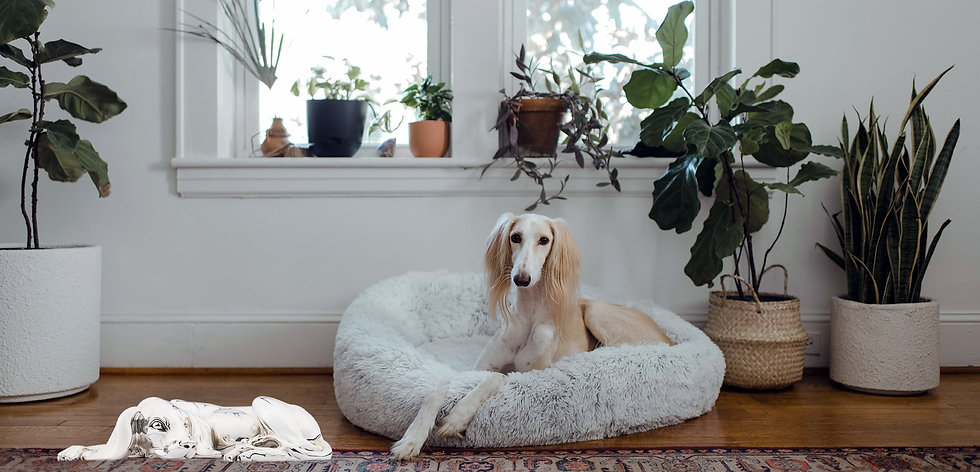 A silver Dog Statue by another dog on a puffy bed by chewy_edited.jpg