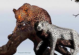 Leopard Statues.jpg