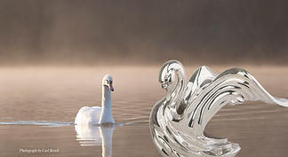 A silver swan statue swimming along a white swan in a lake in the morning