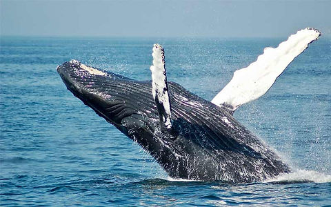 A Whale Statues jumping and splashing