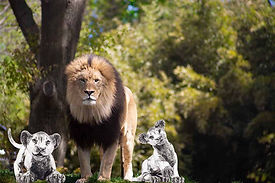 Lion-with-2-silver-lion-statues.jpg