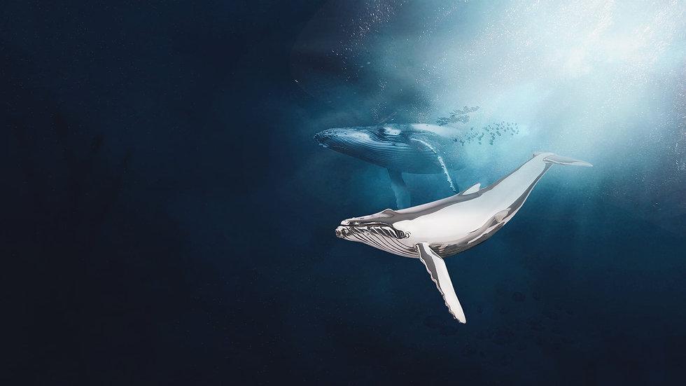 Aquatic Animal Statues.jpg
