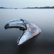 Krabbekloa i Søgne