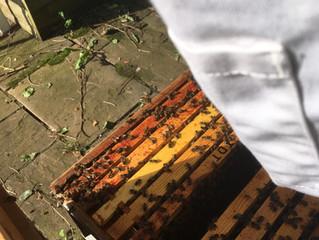 August Bee Blog