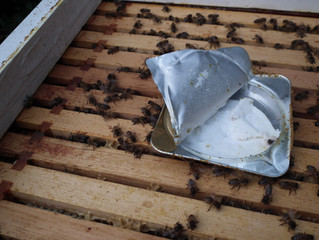 Preparing the bees for Winter