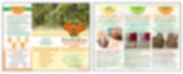 Brochure - CitruSolution.png