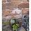 Thumbnail: Terrarium 2