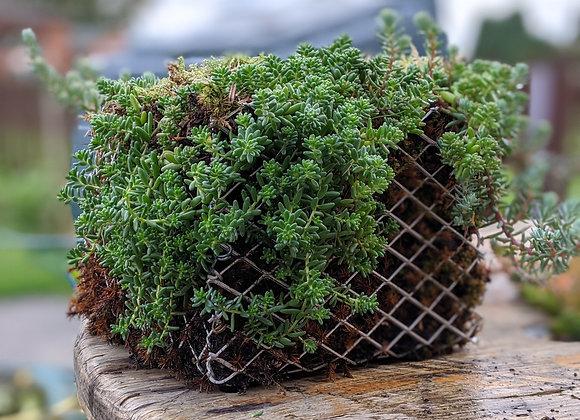 Wire basket planter -Medium