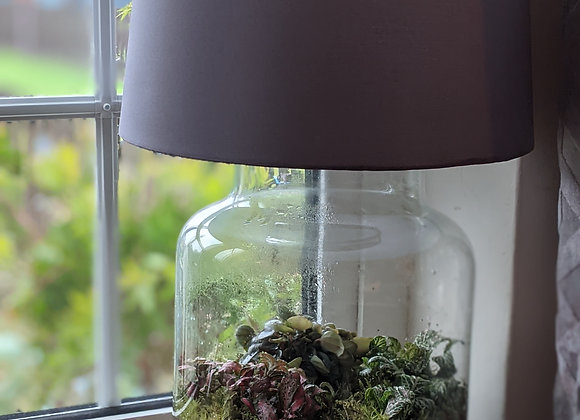 Terrarium Lamp 3