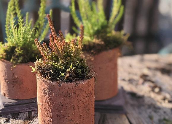 Terracotta pipe planter - Heather