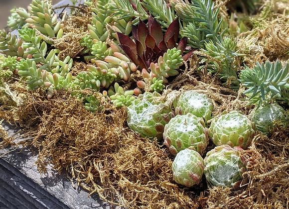 Square reclaimed slate planter - Large
