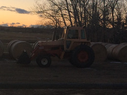 Hay ready for the winter