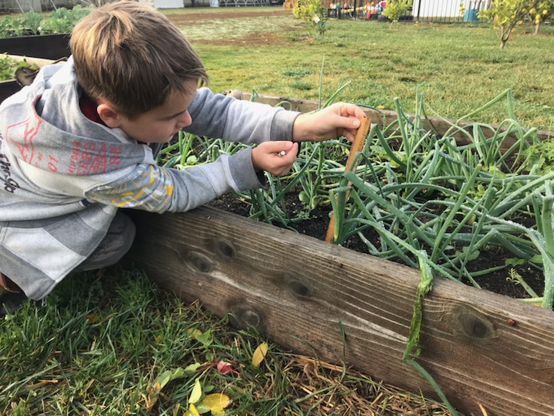 Simon tracking plant growth