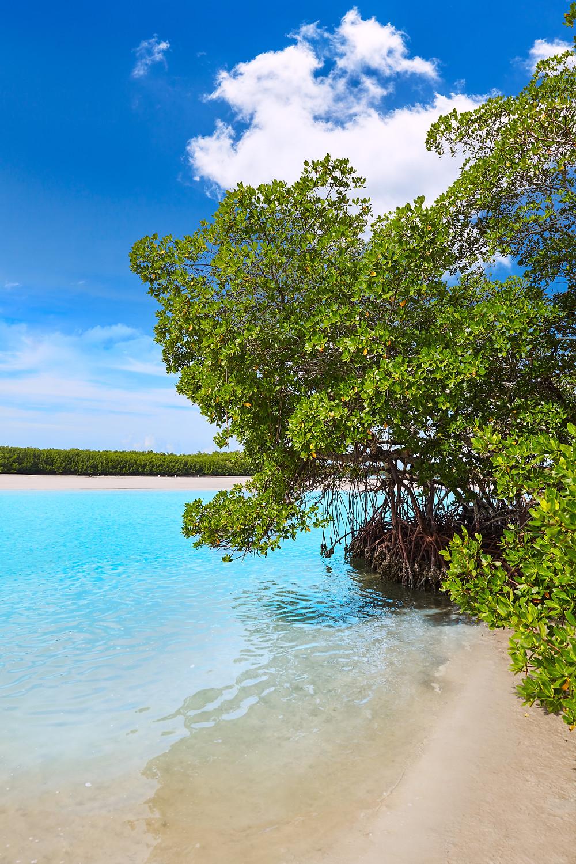 Mangroves on estuary turquoise water