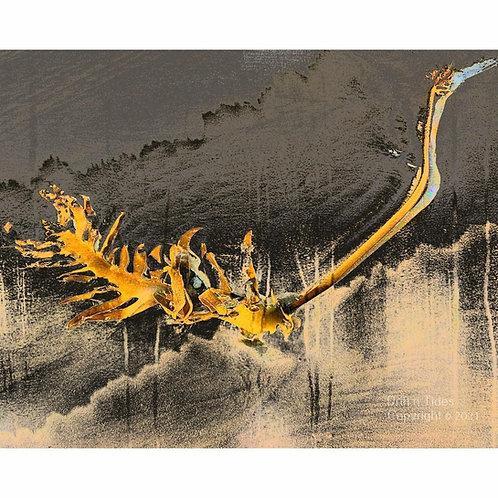 Kelp Sea Dragon