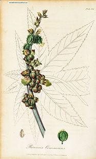 Herbalist Remedies