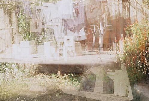 35mm_blurry backyard moulds.jpeg