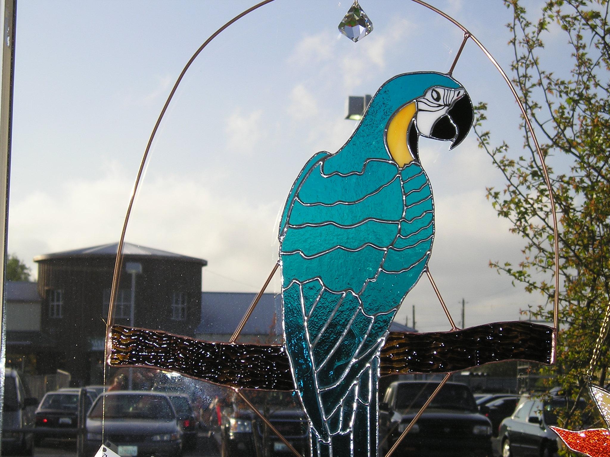 Closeup of Blue Macaw
