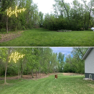 Yard Cleanup Before/After