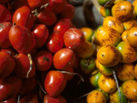 Pejibaye - One of Costa Rica's must-try Ingredients