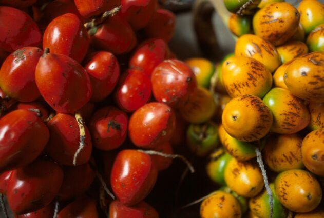 A little-know Central American Super Fruit: Pejibaye