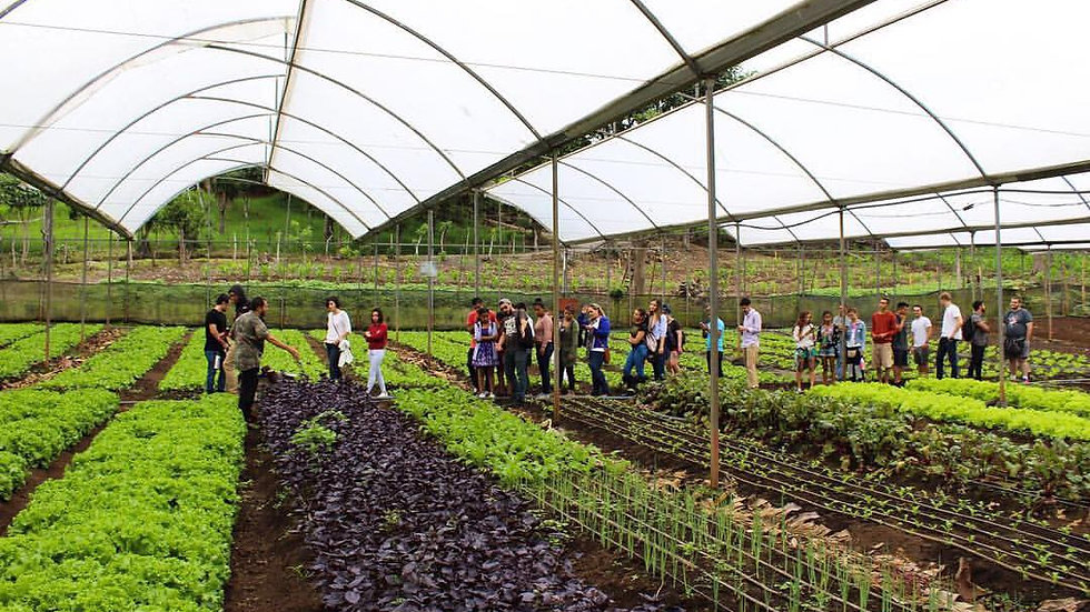 Costa Rican Farming Culture | Foodie Tours