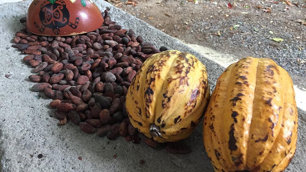 Cacao - Caribbean Experience
