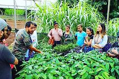Farming Culture - Al Mercat
