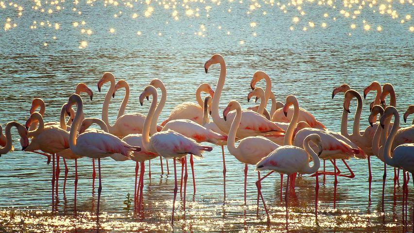 flamingos lake.jpg
