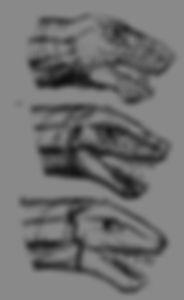 K'chain Che'Malle heads design. Concept Art, based on the malazan Books of the Falen