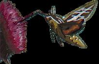 humingbird moth illustration art insect
