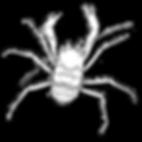Giant Crab token for online Tabletop RPG games. Jacob Gamm