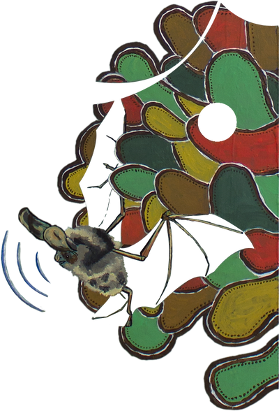 bat illustration ecolocation mamal art