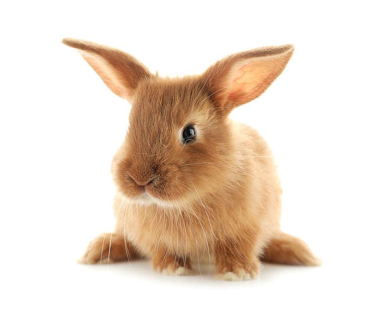 Cute fluffy baby rabbit