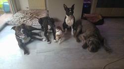 Minla Education Educateur Canin 06