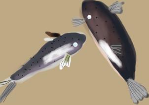 שני דגים
