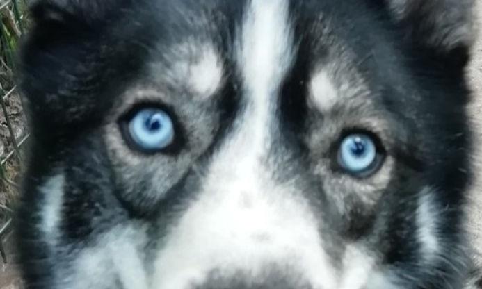 Education canine, comportementaliste canin, pension canine Charente Maritime 17. Saint Jean d'angély, Rochefort, La Rochelle, Surgères Saintes, Tonnay Charente, Tonnay Boutonne, Les Nouillers