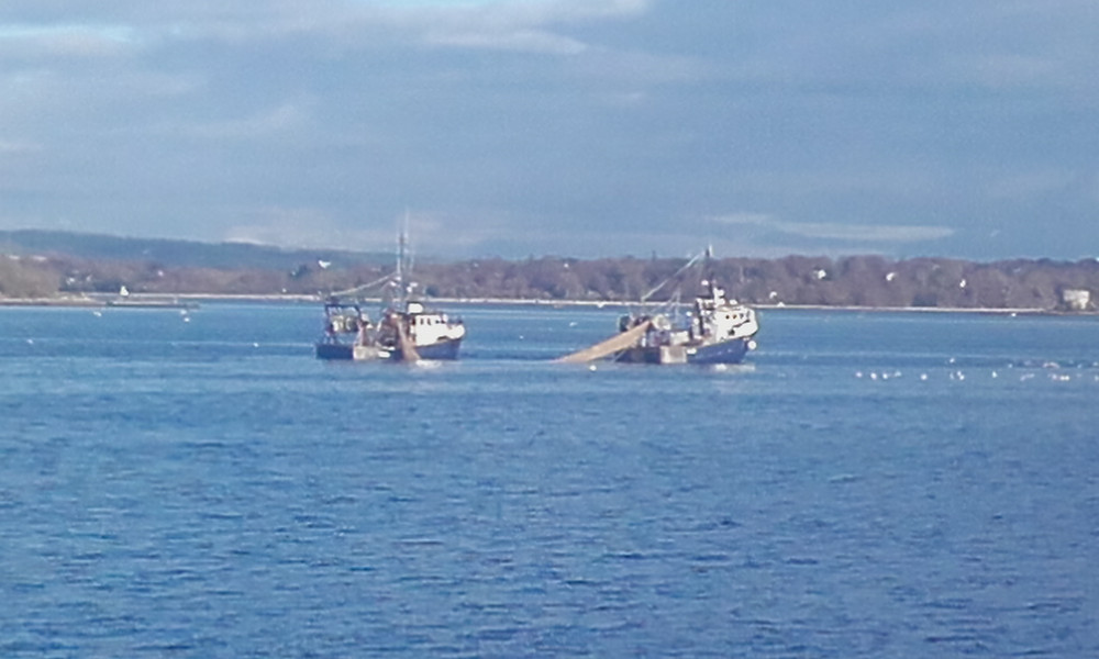 Pair trawling in Cork Harbour, 2016