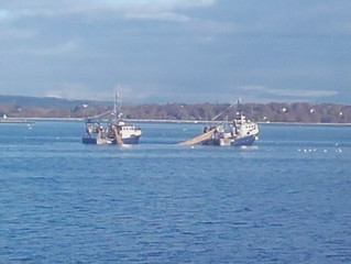 Ban pair-trawling in estuaries as a first step to protecting the marine environment