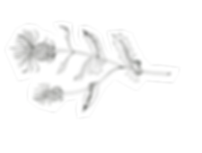 Milk Thistle png.png