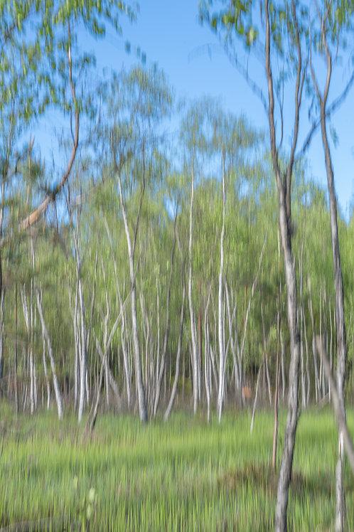 Kesätuuli (puu, 60x40cm)
