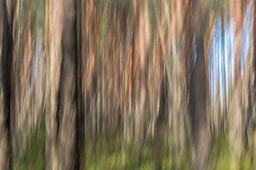 Metsä (metalli, 60x40cm)