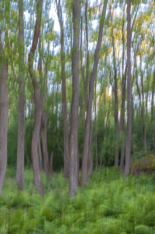 Kaunissaari (puu, 60x40cm)