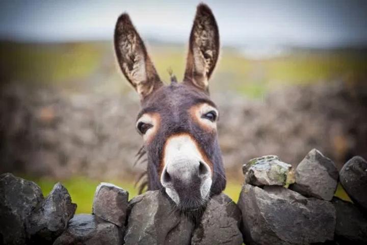 DonkeyDay.jpg