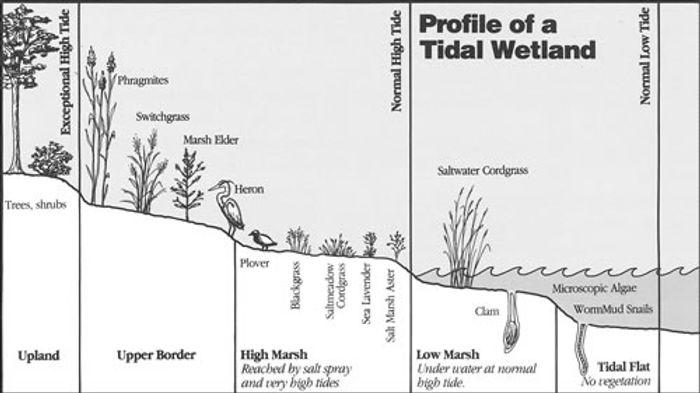 Wetland profile North bay Land Hobart