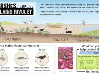 THe Clarence Plains Saltmarsh is an Important Urban Wetland